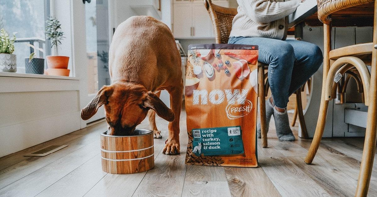 Dog eating his Now Fresh Food