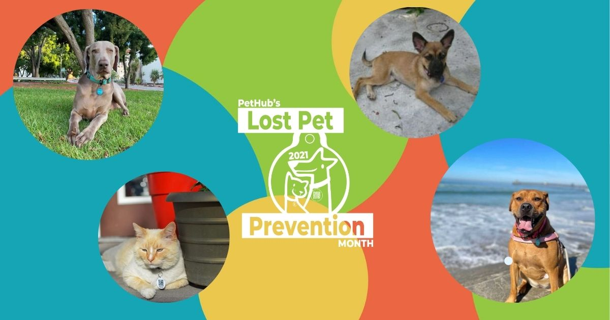 Lost Pet Prevention Month Logo with images of dogs all around it