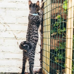 Cat trying to escape through the fence