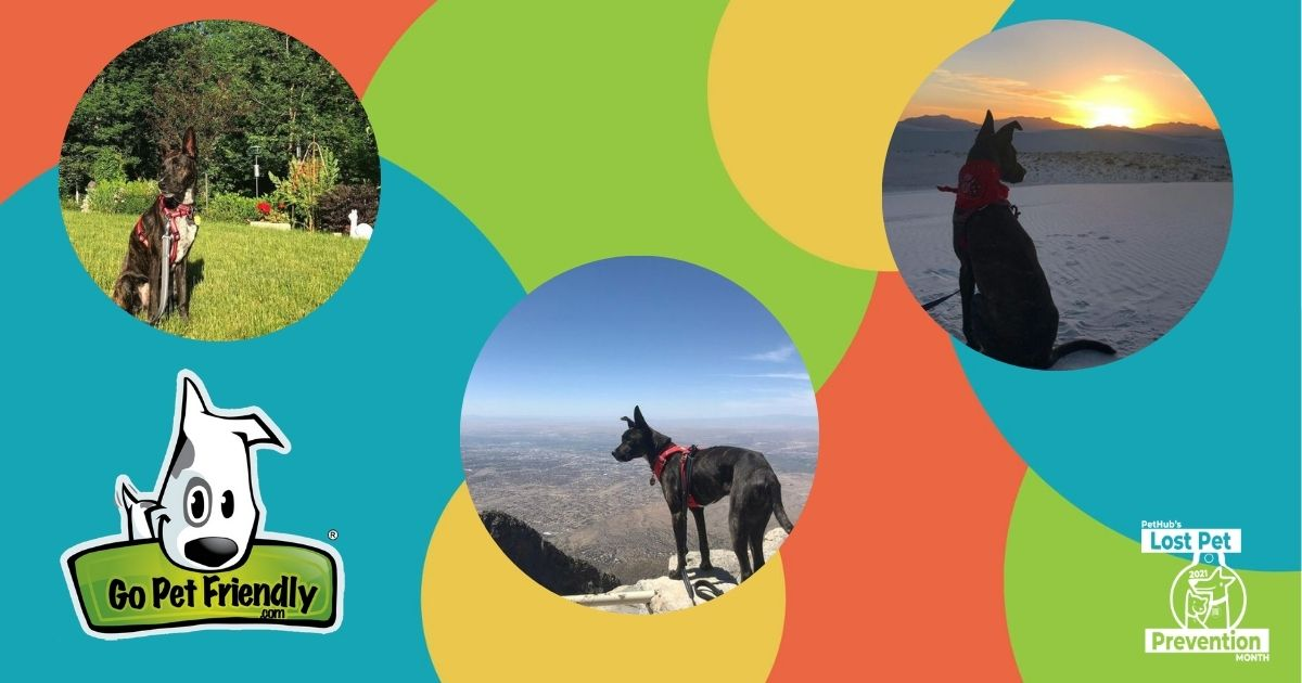 3 photos of dogs in the outdoors with the GoPetFriendly logo and Lost Pet Prevention Month Logo