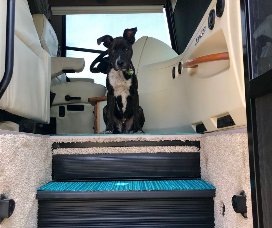 Dog sitting at the front of RV
