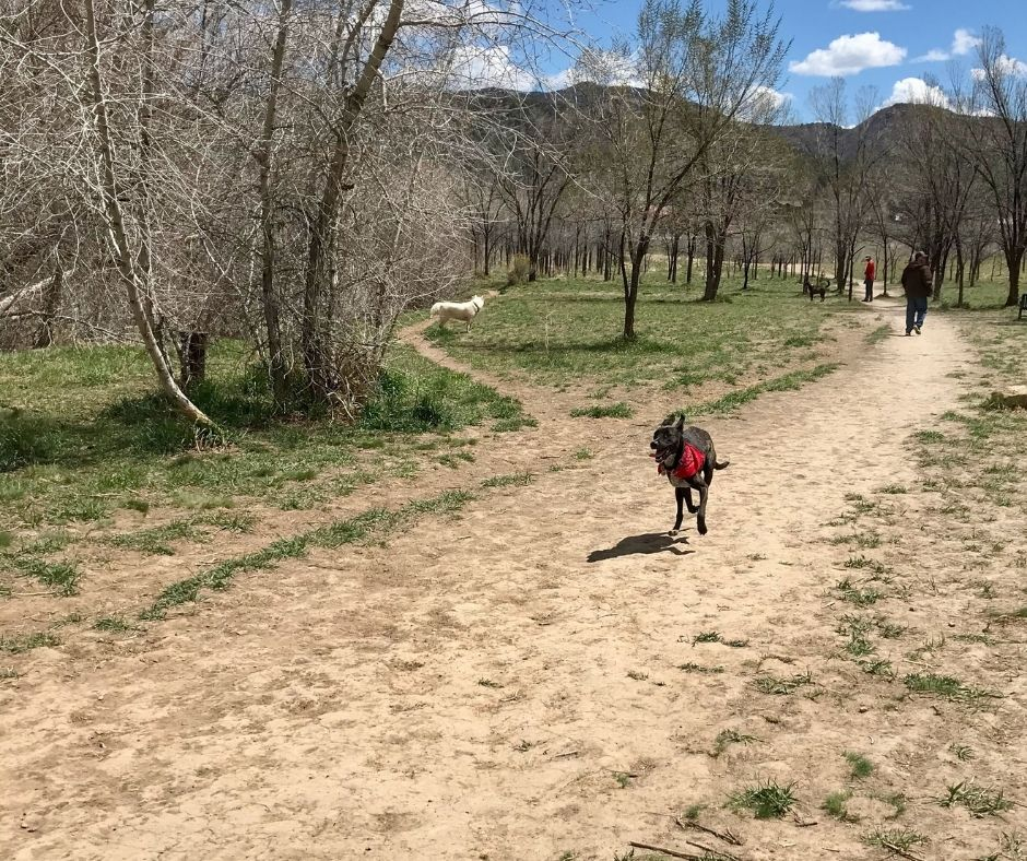 Dog running on trail