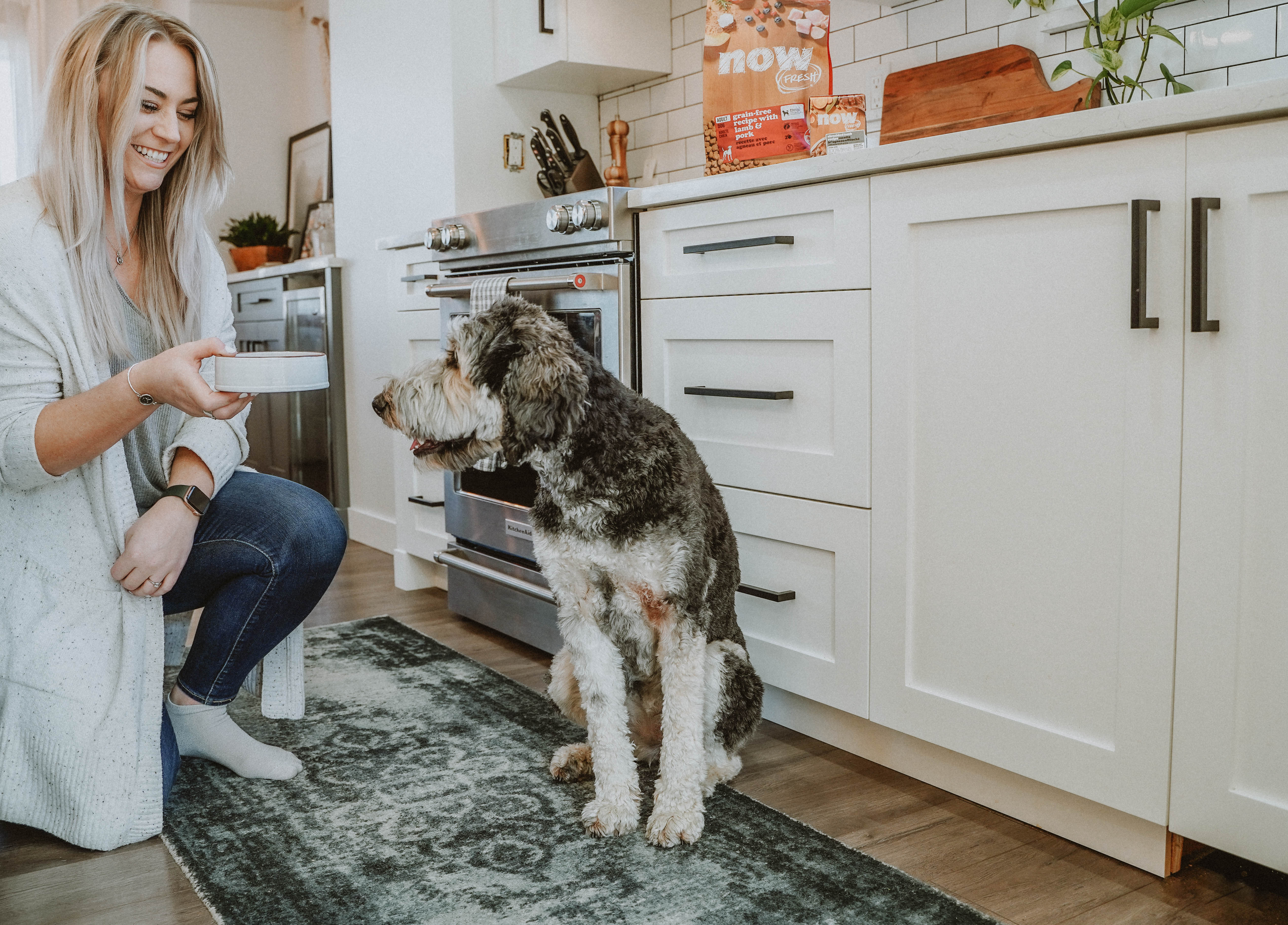 Senior dog sitting with its owner and waiting to be fed dog food