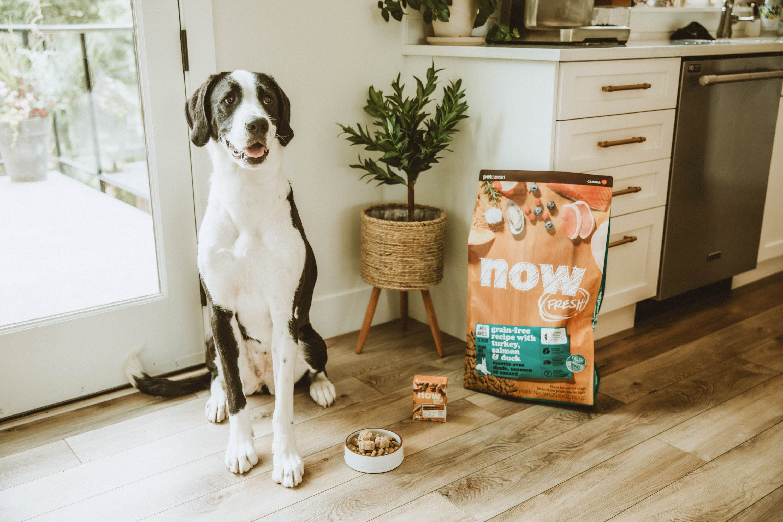 Senior dog sitting next to dog food in a kitchen