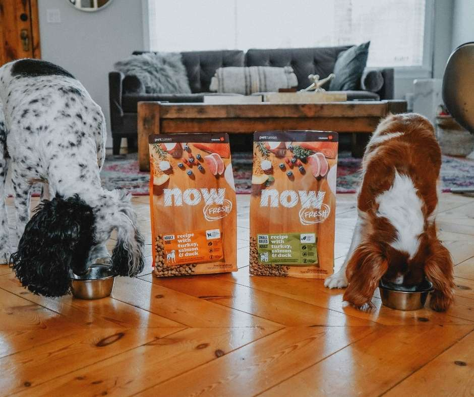 Two dogs Next to a bag of Now Fresh Dog Food