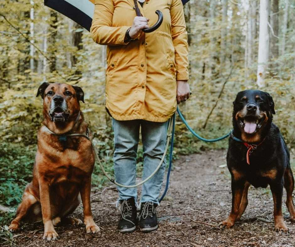 Two Dogs on leashes standing with their owner in the forest