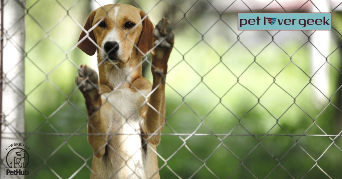 Dog standing on hind legs through a shelter fence