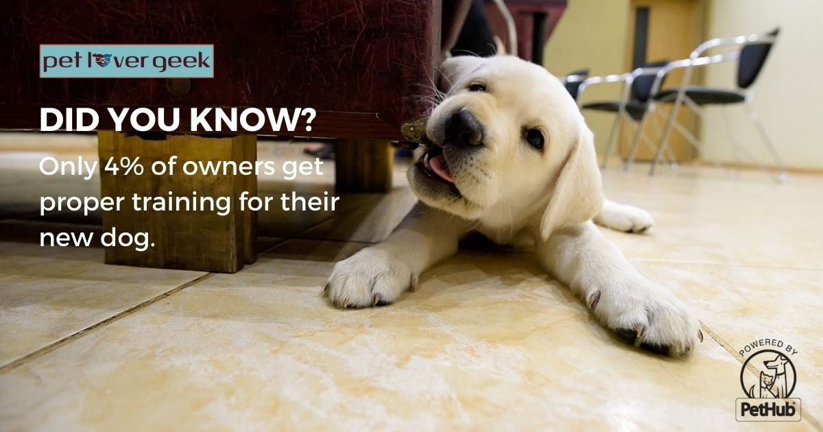 Puppy chewing on a leg of a sofa